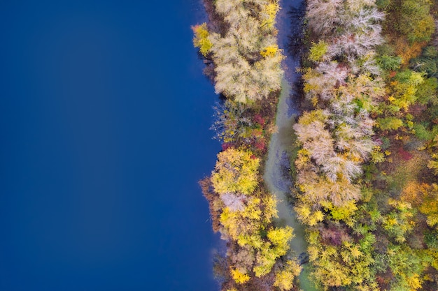 Colorful autumn forest with trees on the shore of a blue lake background - top aerial view.