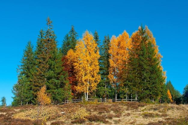 カルパティア山脈のカラフルな秋の風景。mykulychyn、