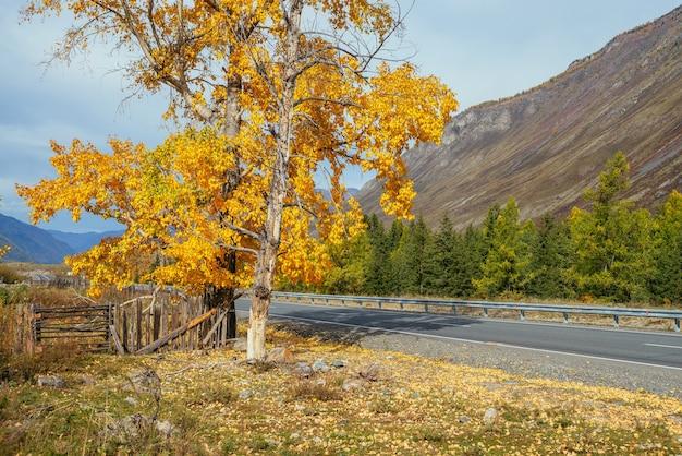 山の高速道路の近くの日差しの中で黄色の葉と白樺の木とカラフルな秋の風景。山道と秋の色の木々と明るい高山の風景。秋の時間の山の高速道路。