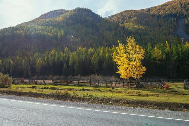 山の高速道路の近くの日差しの中で黄色の葉と白樺の木とカラフルな秋の風景。山道と秋の色の木々と明るい高山の風景。秋の山の高速道路。