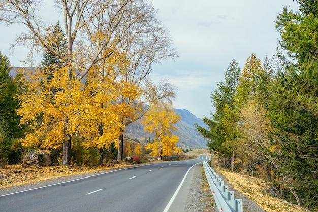 山の高速道路の近くの日差しの中で黄色の葉と白樺の木とカラフルな秋の風景。山道と紅葉の木々のある明るい高山の風景。秋の時間の山の高速道路。
