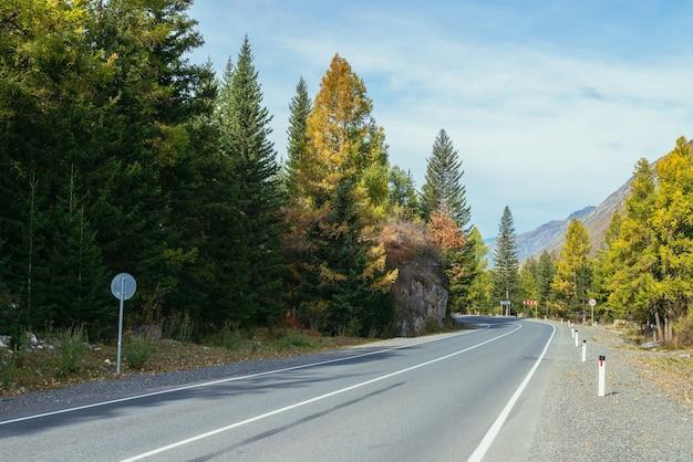 山の高速道路に沿って黄色の枝を持つカラマツとカラフルな秋の風景。秋の色の山道に沿って黄色のカラマツの木がある針葉樹林。秋の時間の山の高速道路。