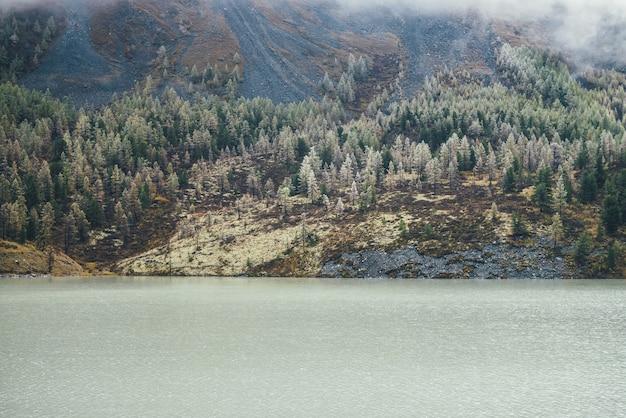 山の湖と苔むした丘の中腹の木々に霜が降りる針葉樹林のあるカラフルな秋の風景。雲の少ない岩だらけの山腹に霜が降りる美しい黄色のカラマツの美しい景色。