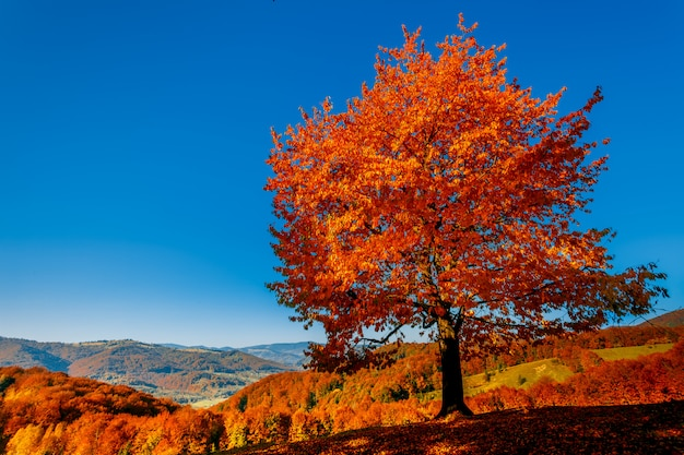 Colorful autumn landscape