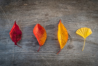 Colorful autumn leaf on wooden table background.
