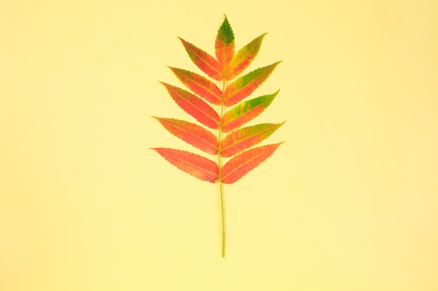 Colorful autumn leaf on yellow background. minimal . copyspace.