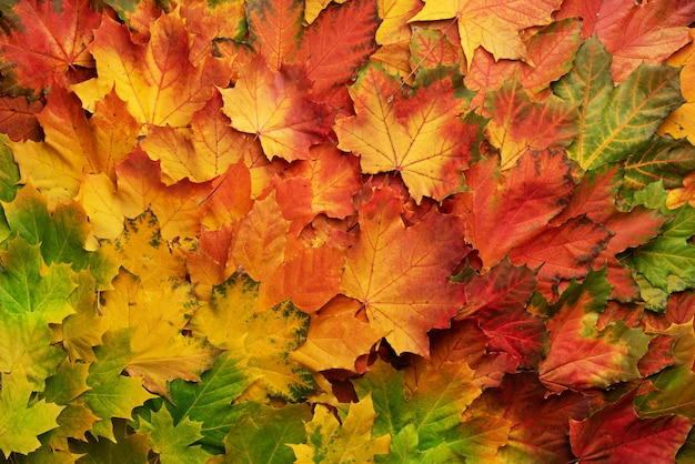 Colorful autumn leaves background with copy space. cozy fall mood. season and weather concept