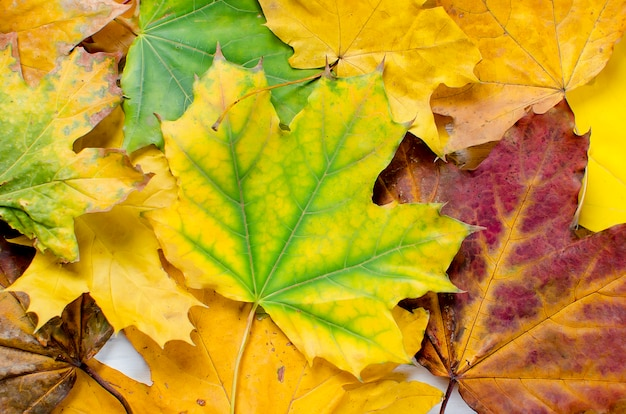 Colorful autumn leaves background
