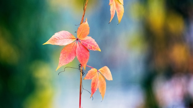 Colorful autumn leaves on a blurred background