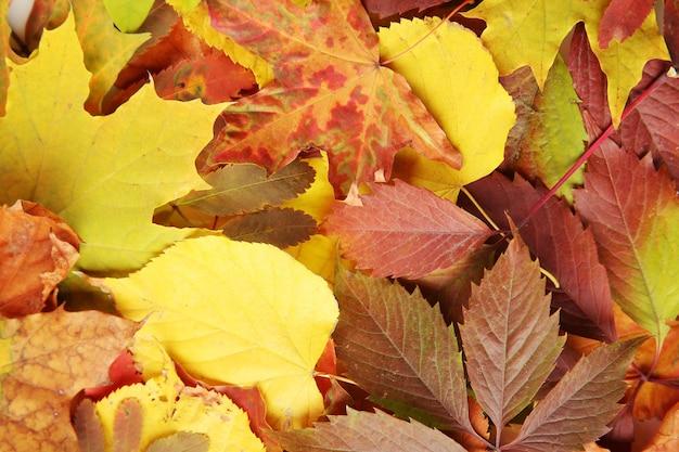 カラフルな紅葉、クローズアップ