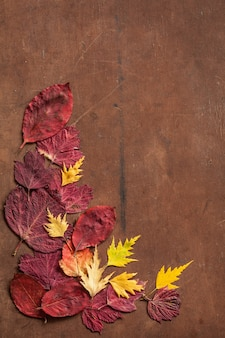 Colorful autumn leaves on dark rustic background
