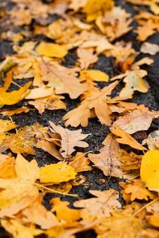 Разноцветные осенние листья опали