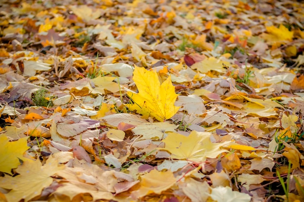 Colorful autumn leaves on the ground.