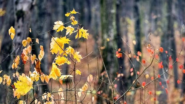 曇天の森の紅葉