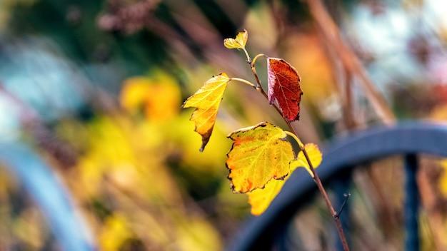 ホワイトメタルフェンスの庭に色づく紅葉