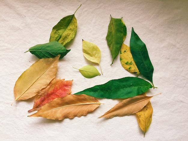Fogli di autunno variopinti isolati su una superficie bianca