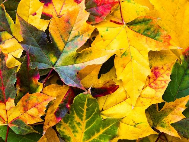 Красочные осенние листья природа фон