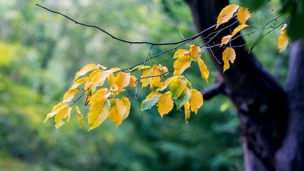 背景をぼかした写真の木に色とりどりの紅葉
