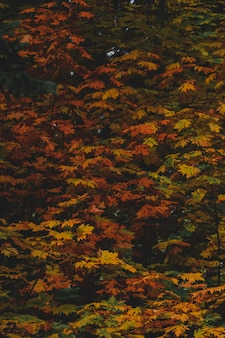 木の枝に色とりどりの紅葉