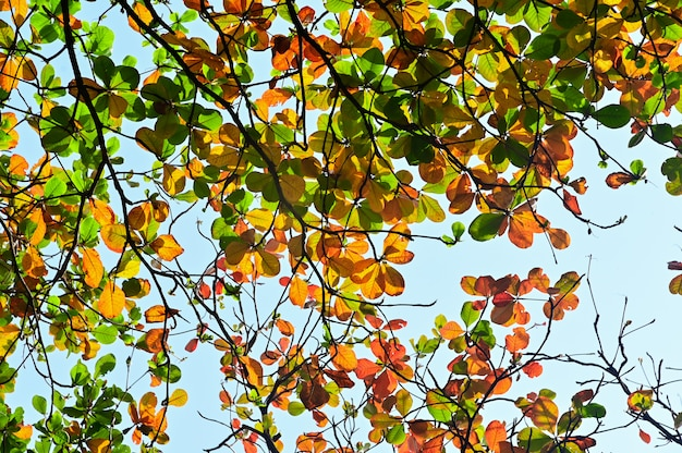 Colorful autumn leaves under tree nature