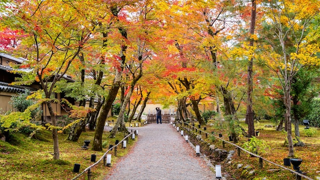 Colorful autumn leaves and walk way in park, kyoto in japan. photographer take a photo in autumn.