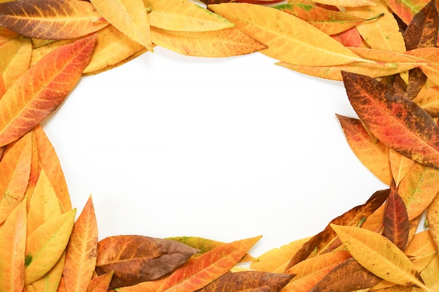Colorful autumn leaves on white background.