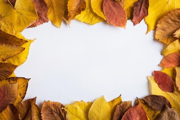 白い空白のカードとカラフルな紅葉