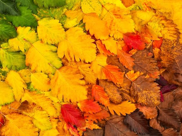 Красочные осенние листья