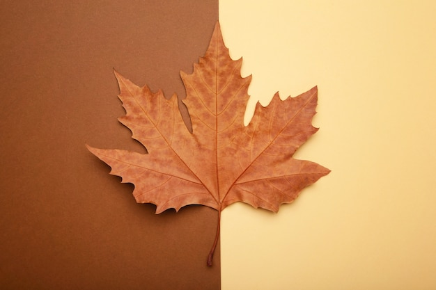 Colorful autumn maple leaf on beige background with copy space.