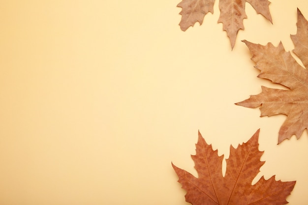 Colorful autumn maple leaves on beige background with copy space.