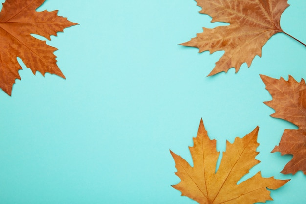 Colorful autumn maple leaves on blue background with copy space.