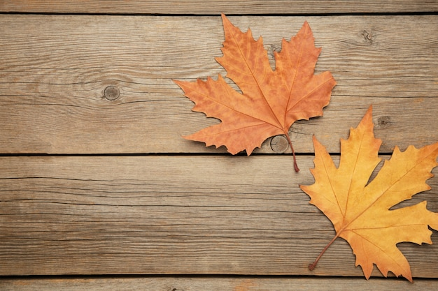 Colorful autumn maple leaves on grey background with copy space.