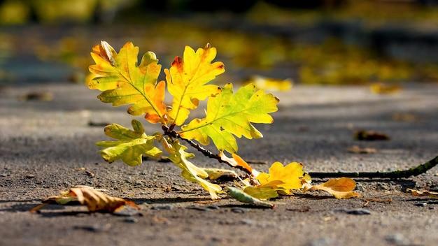 公園のアスファルトに色とりどりの紅葉、紅葉