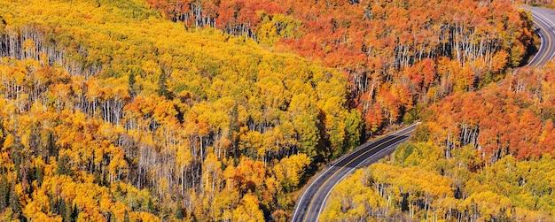 森の中の田舎道のカラフルな秋のシーン