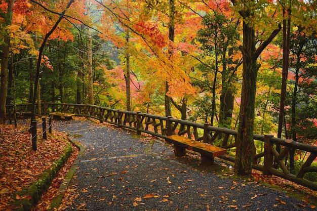 Colorful autumn season,autumn on during mist and sunrise ,japan