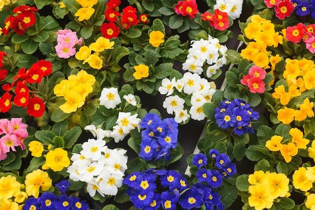Красочный фон из цветов, вид сверху.