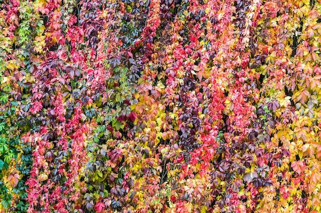 Красочный фон из растений и осенних листьев
