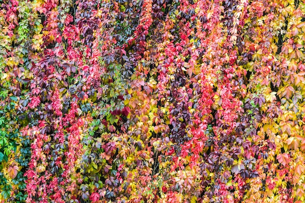 Colorful background of plants and autumn leaves