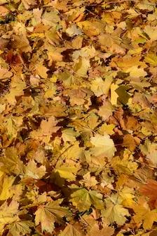 秋の落ち葉のカラフルな背景画像は季節の使用に最適