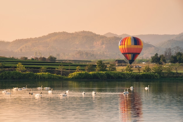 Colorful balloon on field with swan on lake