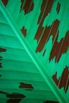 Красочный банановый лист коричневый и зеленый текстуру фона