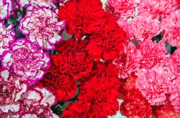 背景としてカラフルな美しいカーネーションの花。閉じる