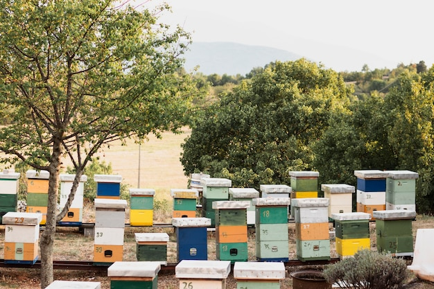 Colorful bee hives with green trees