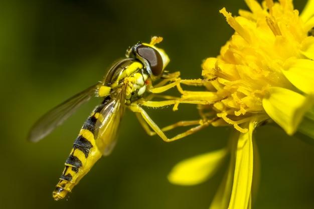 花の上に座ってカラフルな蜂をクローズアップ