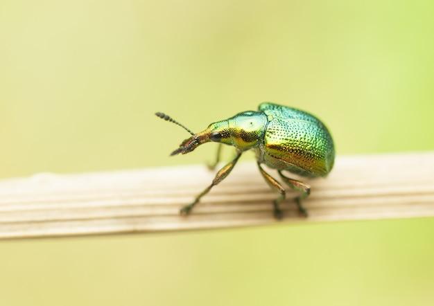 잎사귀에 화려한 딱정벌레