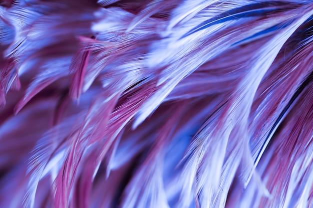 カラフルな鳥や鶏の羽の柔らかさとぼかしスタイル
