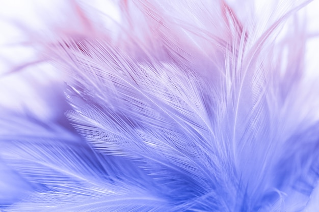 Colorful bird and chicken feathers in soft and blur style for the background, abstract art