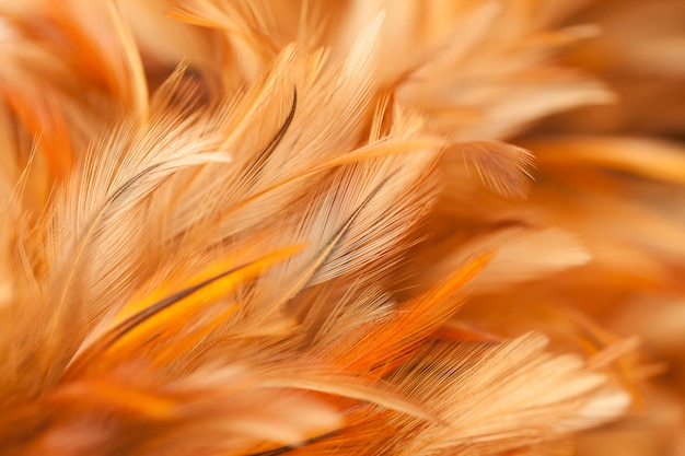 Colorful bird and chicken feathers in soft and blur style for the background Premium Photo