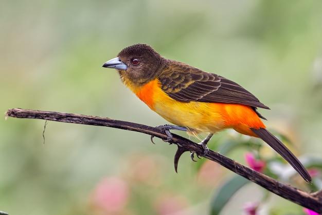 마른 나뭇 가지에 화려한 새