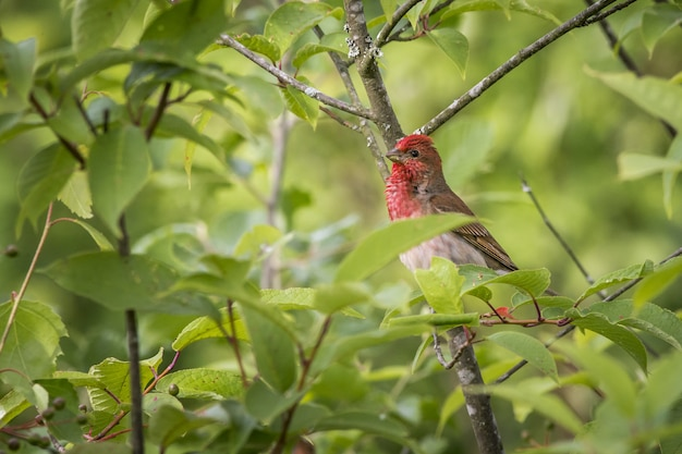 枝に座っているカラフルな鳥